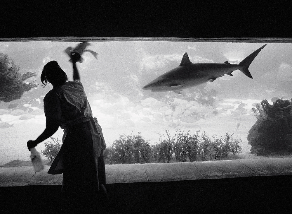 Woman cleaning aquarium as shark approaches