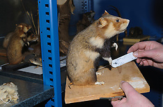 Hidden museum collections, Amsterdam Zoological Museum