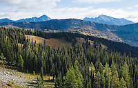 Forest and mountains in the North cascades mountain range as seen from the Pacific Crest Trail near harts Pass in Washington State, USA.