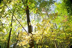 Autumn Foliage, Central Park