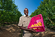 Agricultural photography bounces with big smiles and colourful produce. Zimbabwe was the location, and stone fruit the produce.