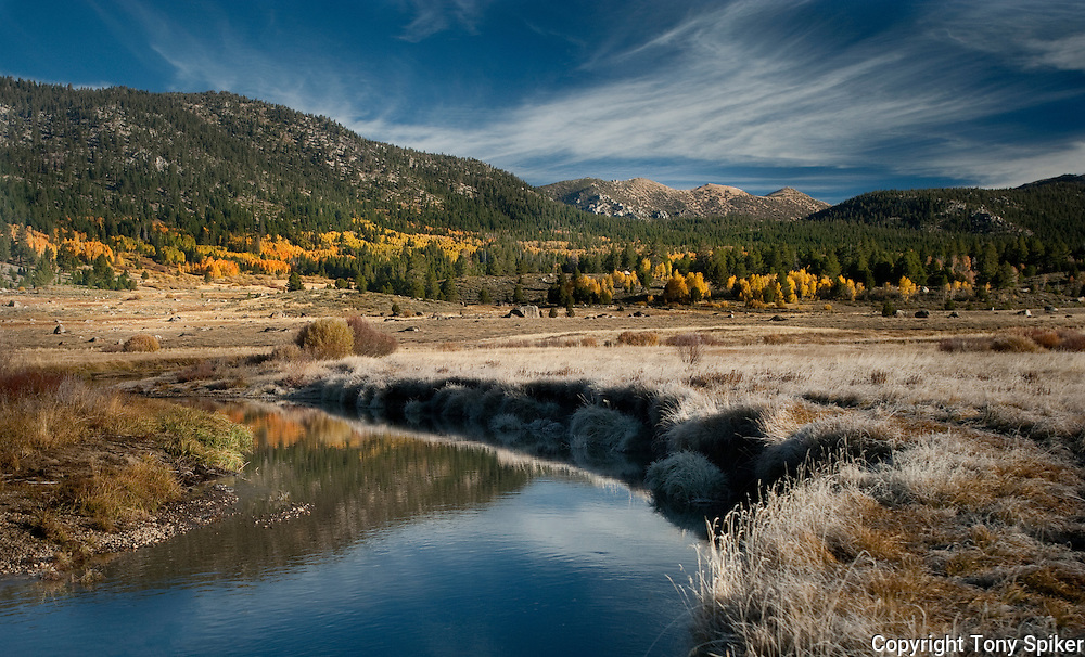 """""""Fall Along the West Carson River 3"""" - Frost forms on grasses on a crisp fall morning along the West Carson River in Hope Valley"""