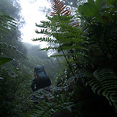 Mt Kanlaon Rainforest 2011