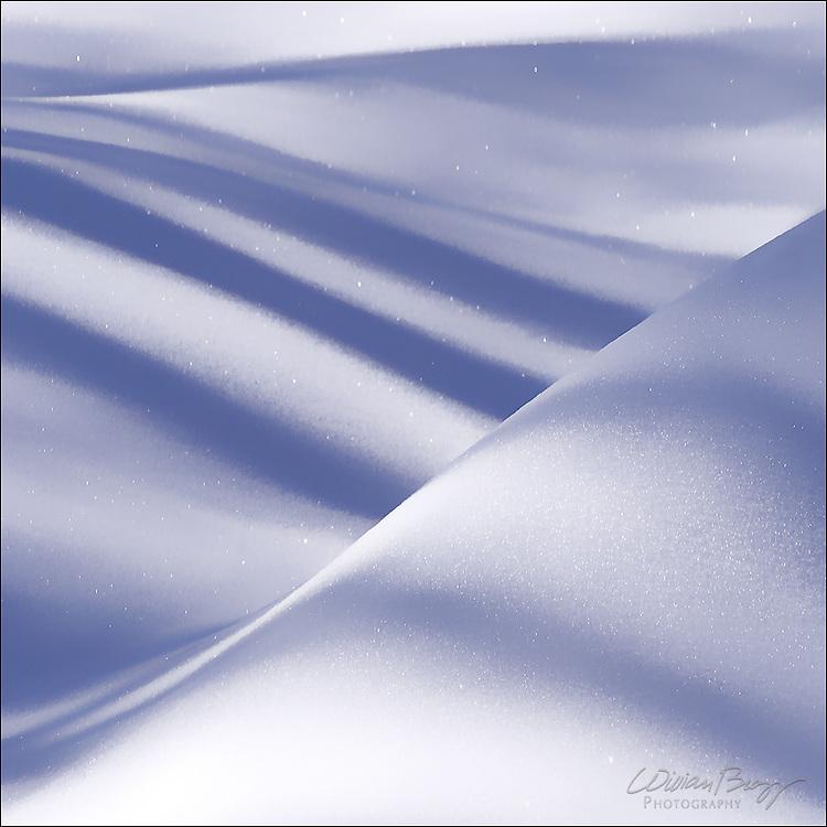Tree shadows falling on a snow drift