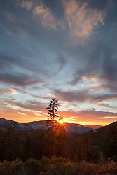 """Blackwood Canyon Sunset 2"" - Photograph taken in Tahoe's Blackwood Canyon of a pine tree and mountain at sunset."