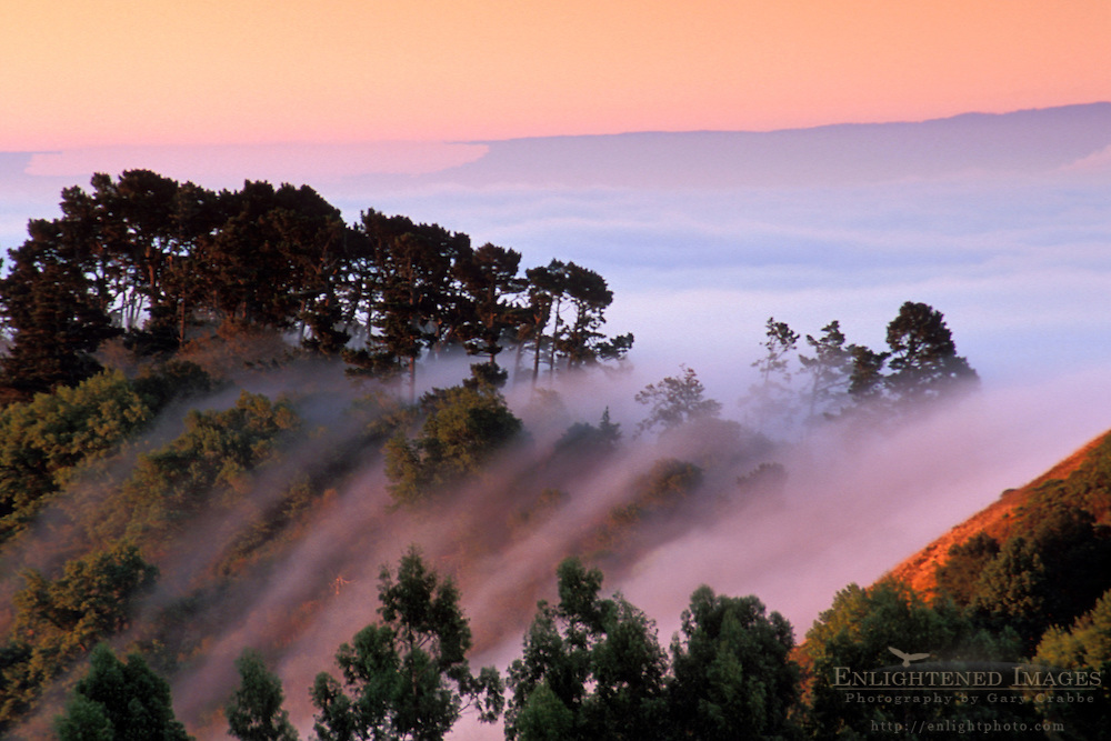Fog at sunrise rolling in over the Berkeley Hills, Alameda County, CALIFORNIA
