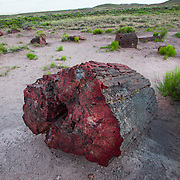 Petrified Forest National Park, National Park, Park, Natured, Petrified, USA, Arizona, Desert