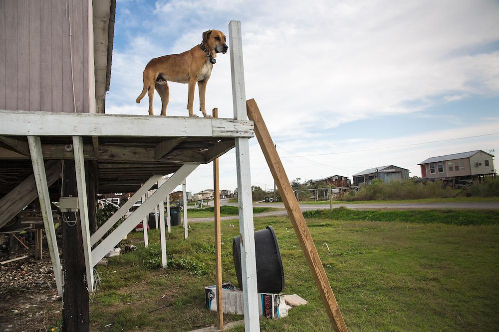 Dog on Isle De St. Charles.