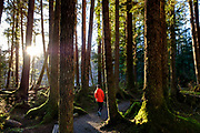 Hiking through moss covered trees on the Outer Point Loop Trail, on North Douglas Island in Juneau,  Alaska, February 18, 2017. <br /> Photo by David Lienemann