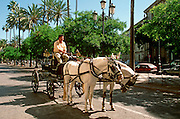 SPAIN, ANDALUSIA JEREZ DE LA FRONTERA; a city famous for its sherry wine and Spring Fair; wide elegant streets in this aristocratic city
