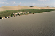 Mongolia. dunes and desertification  Durgun Nuur Lake/ dunes de sable desertification   Durgun Nuur Lake  Mongolie