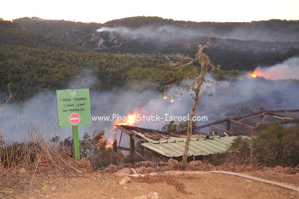 Huge forest fire rages on the Carmel Mountain South of Haifa Israel. International efforts to contain the fire have been going on for the last 3 days. December 4th 2010. Efforts to save the Hai-Bar Animal Sanctuary .