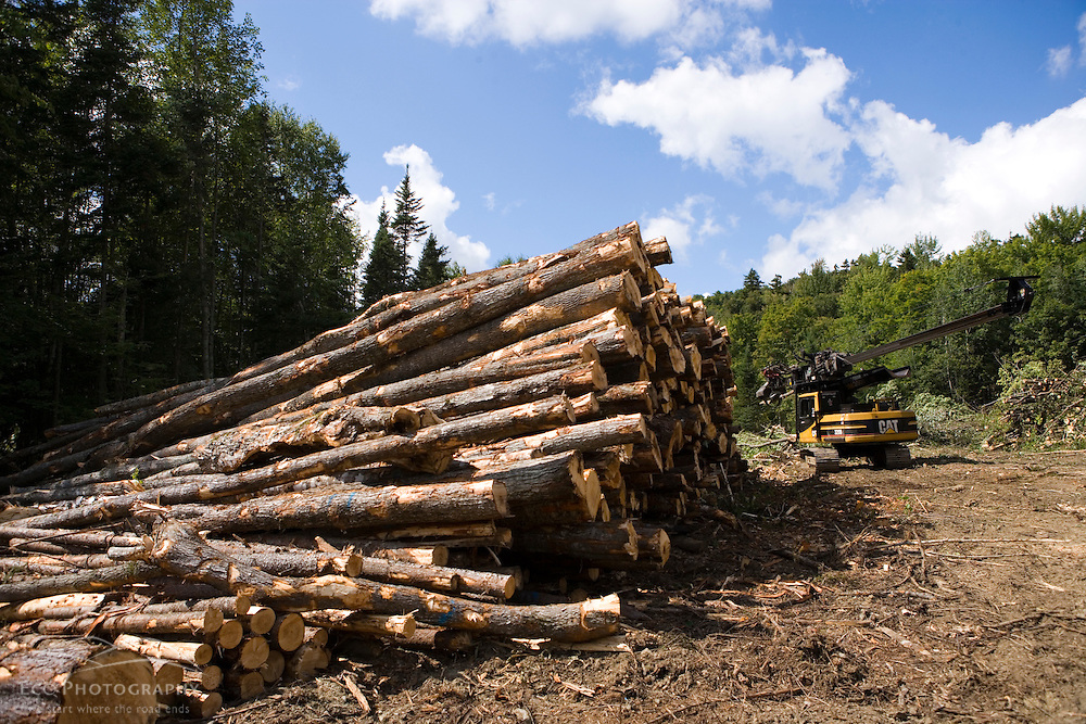 A tree delimber works in a logging yard during an active timber harvest in Second College Grant, NH.  Dartmouth College forest.  Green certified harvest.
