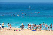 EXCLUSIVE<br /> Having a whale of a time! Photographer captures rare moment a mother humpback whale and her calf ride a wave<br /> <br /> Not even whales can resist the perfect wave!<br /> A mother humpback whale and her calf have been snapped riding a swell at the iconic Banzai Pipeline on Oahu's North Shore in Hawaii.<br /> Dozens of beach-goers flocked to watch Saturday's unusual display, which was captured by photographerJ.T. Gray of North Shore Surf Photos.<br /> The incredible photo shows six-time world bodyboarding champion Guilherme Tamega carving a set, followed by two humpback whales cruising behind on a second swell.<br /> <br /> <br /> Gray told GrindTV that while it's common to see dolphins ride a wave, it is unusual behavior for whales.<br /> 'The whales were 75 to 100 yards east of Pipeline and playing for a while, then swam to about 10 yards outside of the lineup,' he said.<br /> <br /> 'A set came in and the bodyboarder caught the first wave, and the humpbacks caught the second.<br /> 'Whales frequent Hawaii in the winter months, but never that close to shore.'<br /> He said the whales were a mother and calf, suggesting they could have been playing, or perhaps that the mother was keeping tabs on her cheeky calf.<br /> <br /> 'Yes, it's the first time anyone has seen a humpback surf or get that close to the waves, but they do get really close to shore,' Ocean Defender's Oriana Kalama told GrindTV. <br /> 'Humpbacks sing, breach and if you ask me they dance too. If you ever have the chance to see them underwater, you would see how much they seem to enjoy to move their pectoral fins and in a way flirt with each other when in groups.<br /> 'So why wouldn't they surf too? After all they are Hawaiians by birth.'<br /> ©J.T. Gray/Exclusivepix