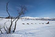 Alaskan Huskies dog-sledding at Villmarkssenter wilderness centre on Kvaloya Island, Tromso in Arctic Circle Northern Norway