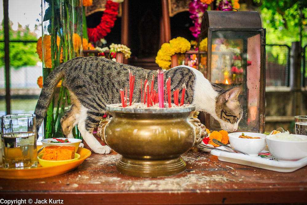 04 JANUARY 2012 - BANGKOK, THAILAND:  A stray cat eats food left in the spirit house at the Lingam Shrine in Bangkok. The Lingam Shrine is a phallus garden behind the Swissotel Nai Lert Park Hotel, an exclusive 5 star hotel in Bangkok. Clusters of carved stone and wooden shafts surround a spirit house and shrine built by a Bangkok millionaire to honour Jao Mae Thap Thim, a female deity thought to reside in a banyan tree on the site. According to Bangkok legend, a woman who made an offering at the shrine had a baby after praying at the shrine, and it has received a steady stream of worshippers ever since.   PHOTO BY JACK KURTZ