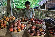 Bali. Indonesia. Kaffefarm; frukt. Foto: Bente Haarstad Bali, Indonesia.