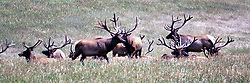 01 July 2006  A quick vacation through Iowa to Omaha.  ..elk (Photo by Alan Look)