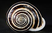 Fibonaci Snail, Austin, Texas, August 7, 2015.