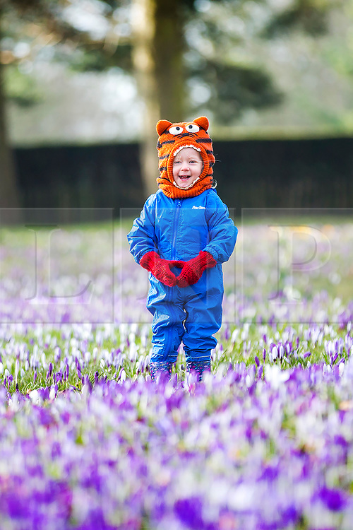 """© Licensed to London News Pictures. 25/02/2018. Leeds UK. 2 year old Scarlet wraps up warm to play in the Crocuses at Temple Newsam park in Leeds this morning as the temperature begins to drop across the UK ahead of the expected arrival of a cold blast known as """"the beast from the east"""" from Russia. Photo credit: Andrew McCaren/LNP"""