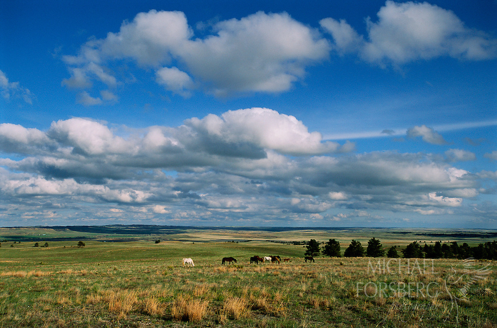 Wild Horse Sanctuary, Black Hills, South Dakota.