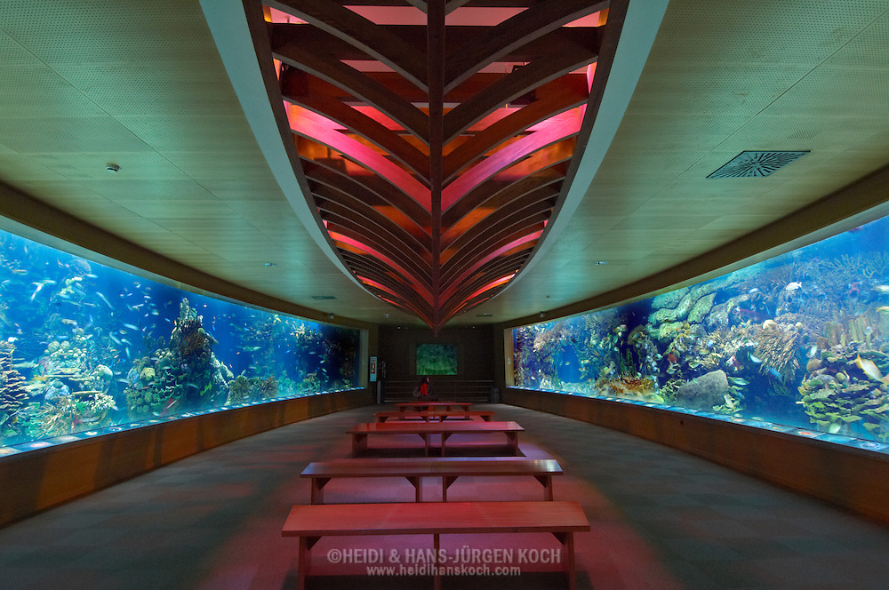 "ESP, Spanien: L'Oceanogràfic, zur Zeit das groesste Aquarium Euorpas, ""Oval room"", dieser Raum aus zwei Panoramaaquarien bestehend zeigt die Riffe der Karibik und des Indopazifik, Stadt der Kuenste und Wissenschaften, Valencia, Valencia 