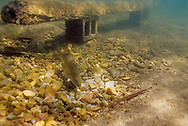 Spawning Benches<br />