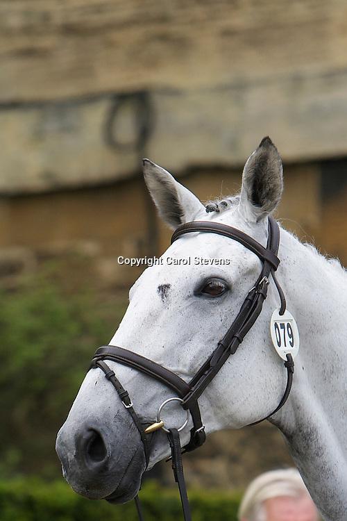 Equi-Trek Bramham International Horse Trials 2012<br /> Final Inspection  CCI3*<br /> Olivia Wilmot and her own Cool Dancer