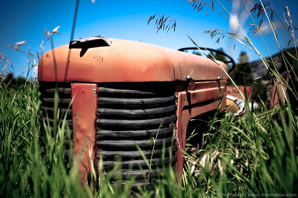 An old red tractor is overgrown by tall grass in a field.