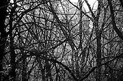 Bare tree limbs in central park.