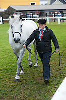 20/08/2015 Ronan Nee with Lehenagh's Pirrette  in the Young Handlers Class (aged 10-15 years) at the Connemara Pony Show 2015 in Clifden Co. Galway. Photo:Andrew Downes