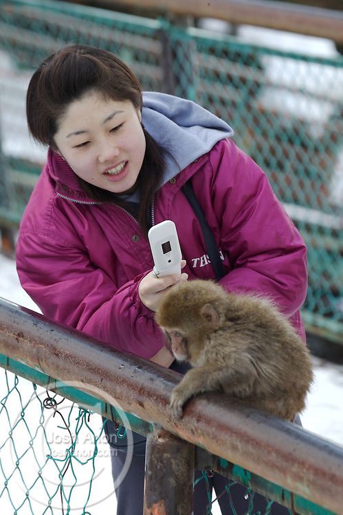 Japan, Jigokudani Monkey Park. A girl takes a picture of a baby snow monkey with her cell phone. Credit as: © Josh Anon / Jaynes Gallery / DanitaDelimont.com