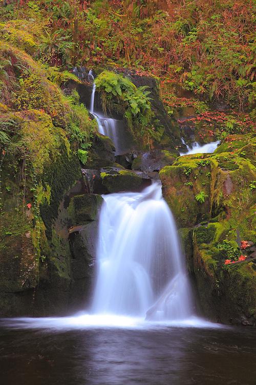 Sweet Creek Falls - Mapleton, Oregon