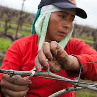 Migrant Field Workers for SPLC
