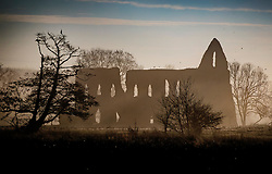 © Licensed to London News Pictures. 17/01/2017. Ripley, UK.  near Ripley. Herons (L) rest in a tree in sight of Newark Priory near Ripley at first light. Cold temperatures are set to continue for most of the United Kingdom. Photo credit: Peter Macdiarmid/LNP