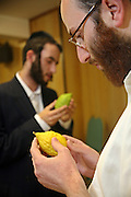 Two Orthodox Jewish men select their Etrog (Citron) for the festival of Sukkot, the feast of Tabernacles. The etrog is used in the mitzvah of the four species.  Everyone has their own personal choice of etrog, some prefer more bumps, the important thing to look out for is a nice form and shape and it should be unblemished.  The holiday of Sukkot commemorates the forty-year period during which the children of Israel were wandering in the desert.