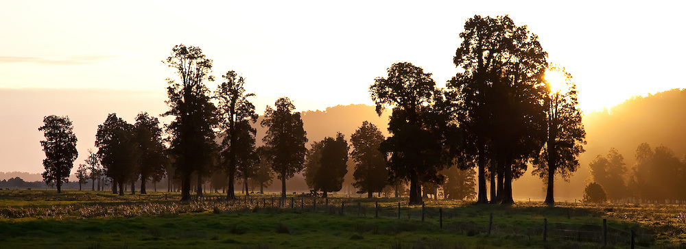Sunset, near Lake Matheson, New Zealand (12x33 inch print)