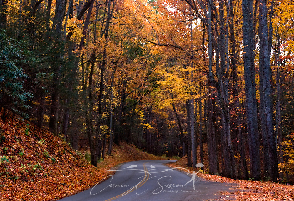 Leaves change colors and make for a pretty autumn drive through the Great Smoky Mountains in Tennessee. (Photo by Carmen K. Sisson/Cloudybright)