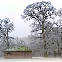 Frost on branches of oak trees near an old stone barn