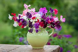 Mixed sweet pea flower arrangement in green jug. Lathyrus odoratus