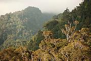 Indonesian Rainforest.