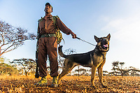 Anti-poaching dog patrols and training session, Mkhaya Game Reserve, Swaziland