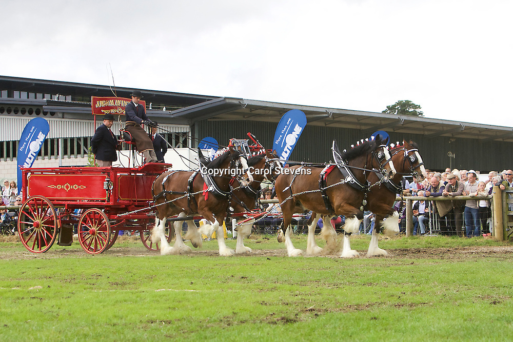 Ronald Brewster driving JW & M McIntyre's Clydesdales