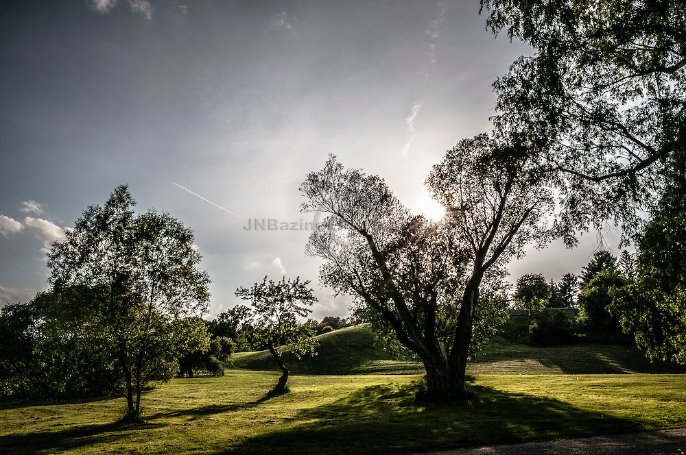 Trees backlit by setting sun in an urban park