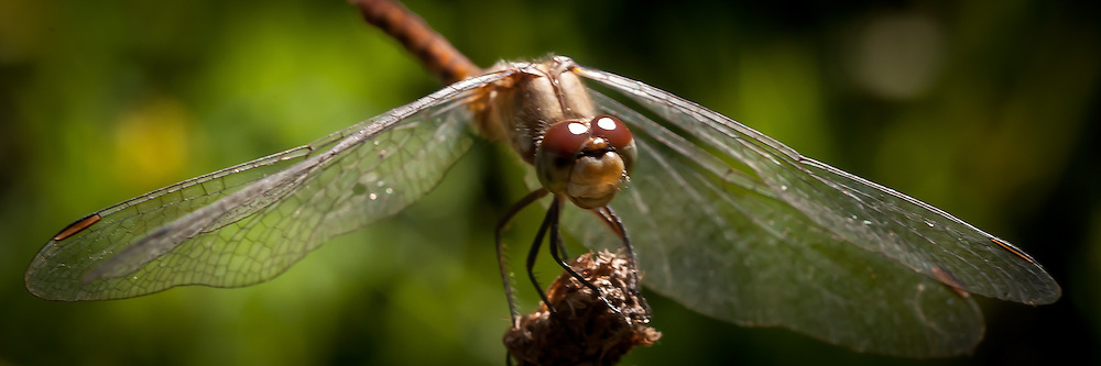 Photographs of various types of Insects.