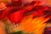 Abstract of flower bouquet , Winnipeg, Manitoba, Canada