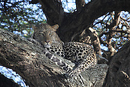 Serengeti, Tanzania, Feb 2015 african wildlife