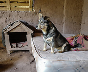 A dog rests in his enclosure at the Soy Callejerito shelter in Cuzco, Peru.