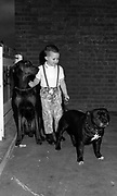 Skinhead child holding dogs. UK. 1980s.