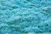 Frosty grass in winter season in England